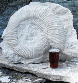 Real-Ale-and-Real-Fossils